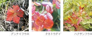 p3_02.jpg
