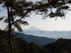 パノラマ台からの富士.jpg