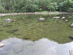 亀甲池湖面.jpg