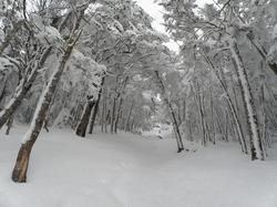 s-冬の蓼科雪.jpg