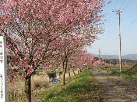 桜並木下河原.jpg