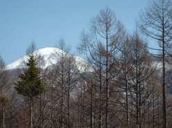 みずなら台より蓼科山を望む190315.JPG