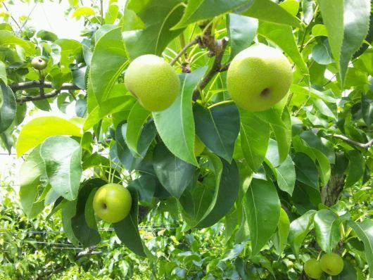 りんご712 3.jpg