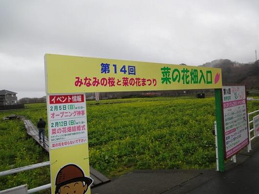 南伊豆町菜の花祭.jpg