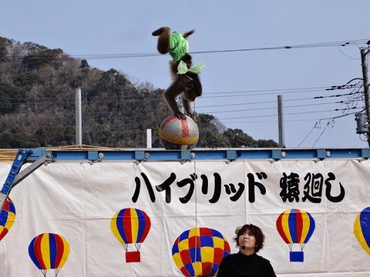 河津桜祭6.jpg