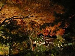 温泉寺1211082.jpg