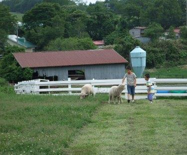 羊とちびっこ2.JPG