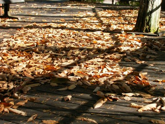 落ち葉いっぱい.jpg