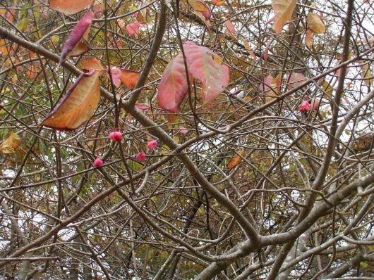葉が落ちた木.jpg