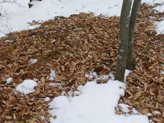 雪と枯葉1.jpg