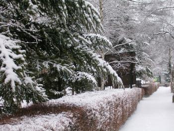 雪をつけた枝.JPG