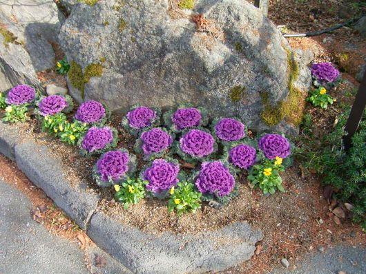駐車場の花壇 右.jpg