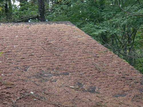 屋根清掃写真171007-2.JPG
